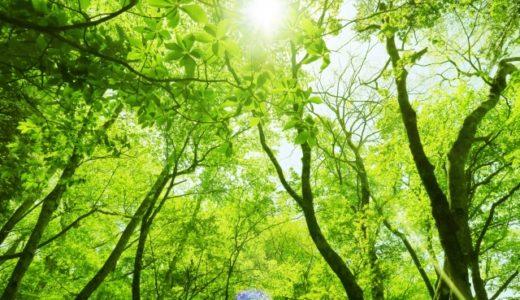 【ひとつ利口になりました】箱根のターザンロープはどこ?全国のフォレストアドベンチャー一覧も紹介!