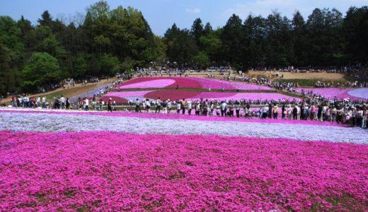 羊山公園の芝桜まつり2020年、見頃は?混雑予想も!