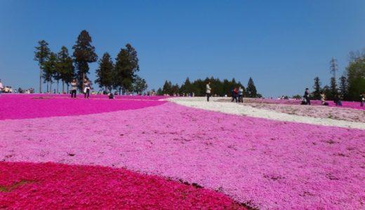 羊山公園の芝桜、駐車場情報!アクセスや営業時間も!